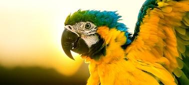 Papagáj képe 4K képrészletekkel