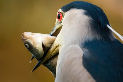 petar-sabol-sony-rx10IV-bird-holding-a-roach-in-its-beak-close-up