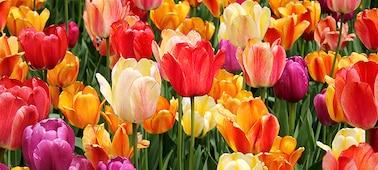 Részletgazdag kép egy virágról, melynek szirmain kivehetők a finom árnyalatok